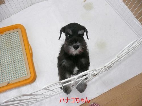 雅っ子キリ9月14日1