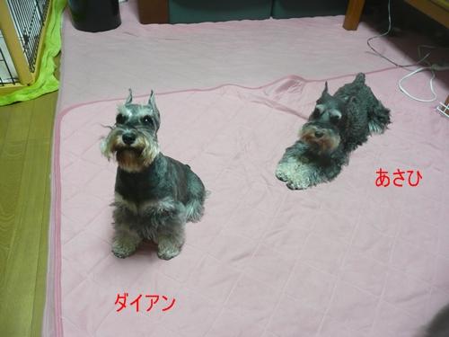 ダイアン&あさひ10月1日