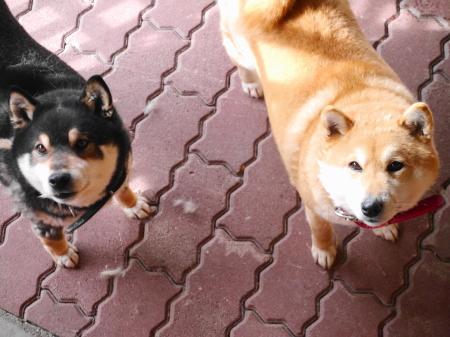 野の花山荘の看板犬