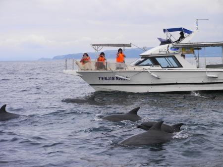 イルカ 船から撮影