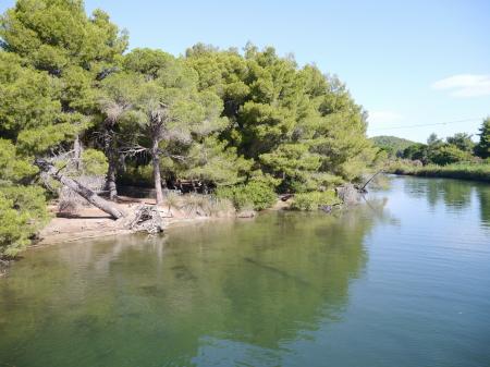 松林の入り江