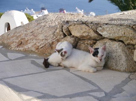 アグナンディ ネコたち