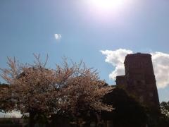 競馬場と桜
