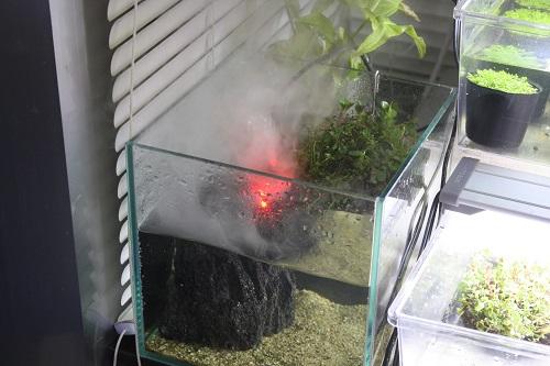 ミストメーカー 東海 岐阜 熱帯魚 水草 観葉植物販売 Grow aquarium