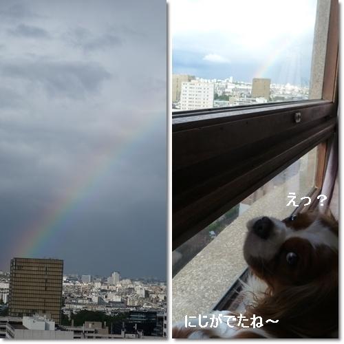 虹とギネス