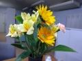 5月後半からの花