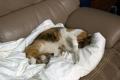 愛猫:2014.04.17