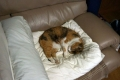 愛猫:2014.04.21