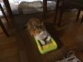 愛猫:2014.08.04