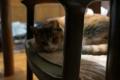 愛猫:2014.02.23