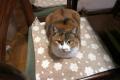 愛猫:2014.02.25
