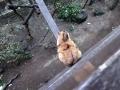 愛猫:2014.02.28