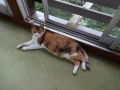 愛猫:2014.07.13