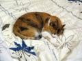 愛猫:2014.07.19