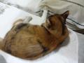 愛猫:2014.07.27