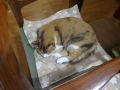 愛猫:2014.06.22