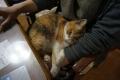 愛猫:2014.03.15