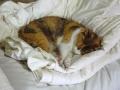 愛猫:2014.03.30