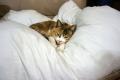 愛猫:2014.05.06