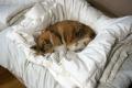 愛猫:2014.05.17