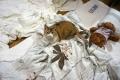 愛猫:2014.05.30