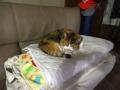 愛猫:2014.09.22