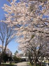 写真 2014-05-02 14 46 22