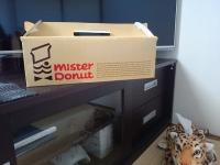 [菓子] ドーナッツ