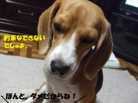 103_convert_20140825042119.jpg