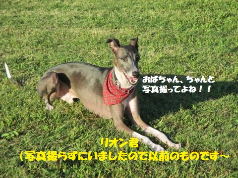 2014_09150199_convert_20141014022509.jpg