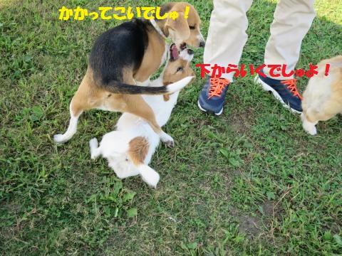 IMG_0018_convert_20141006030139.jpg