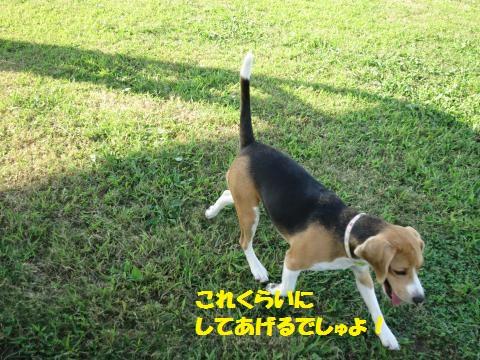 IMG_0021_convert_20141006030433.jpg