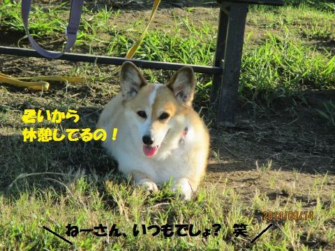 IMG_0457_convert_20140921131744.jpg