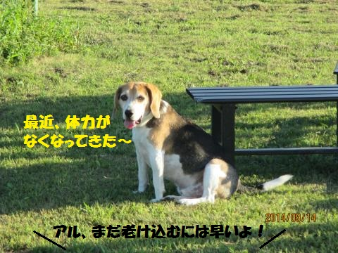 IMG_0458_convert_20140921132250.jpg