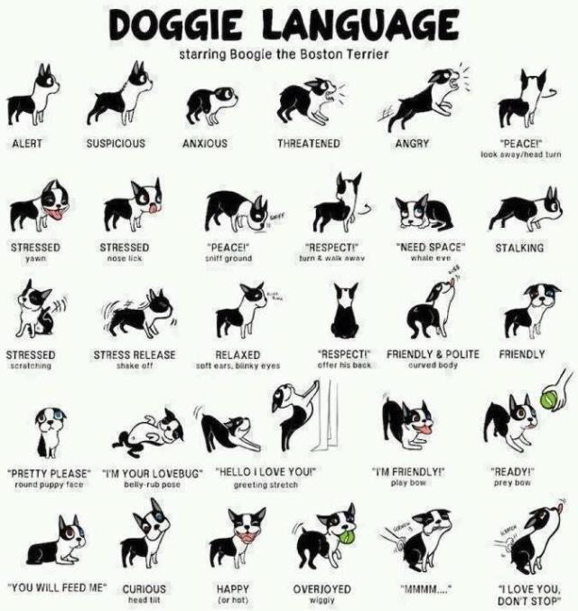 犬の感情表現