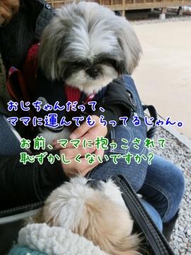 CIMG5377_4 (599x800)