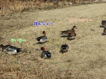 CIMG6486_4 (800x600)