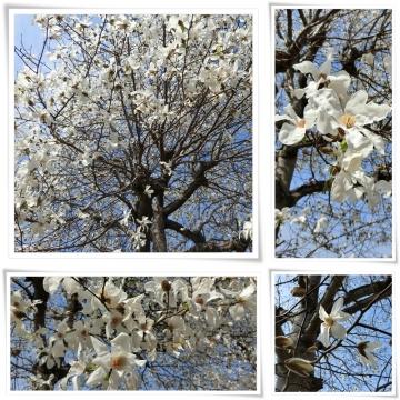 春 (800x800)