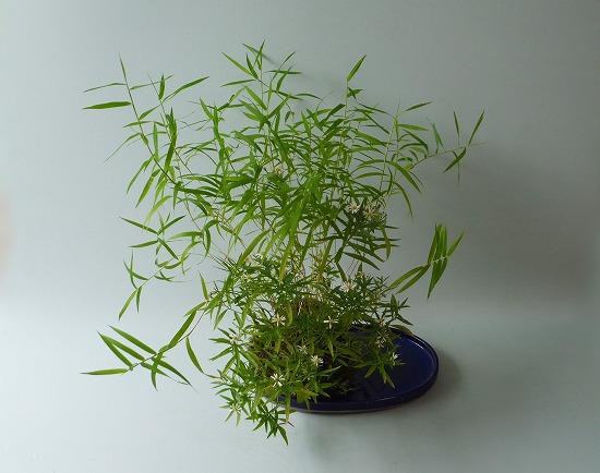 キシュウオギ・菊H26年9月