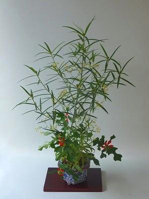 タヌキマメ。ミシマサイコ・猩々草H26年8月