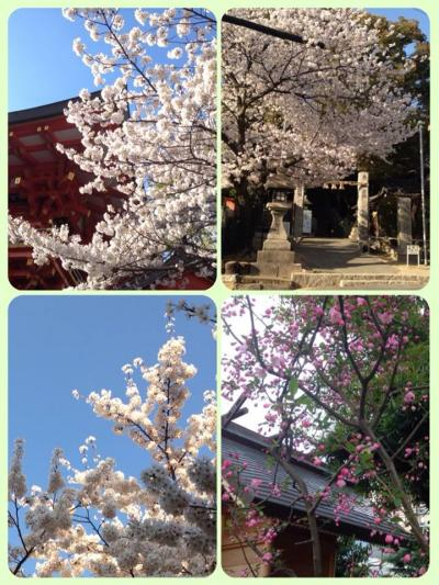 hanasaki_convert_20140419015143.jpg