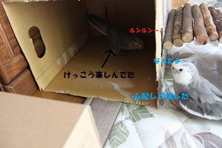 箱をどけてみると~