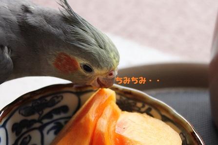 つまみ食い~