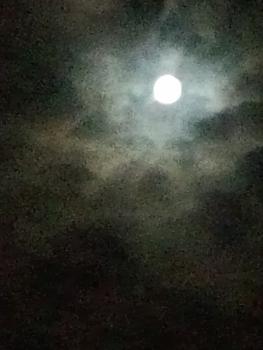 20140909十六夜(いざよい)。