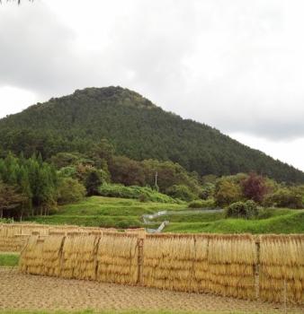 20140917稲木