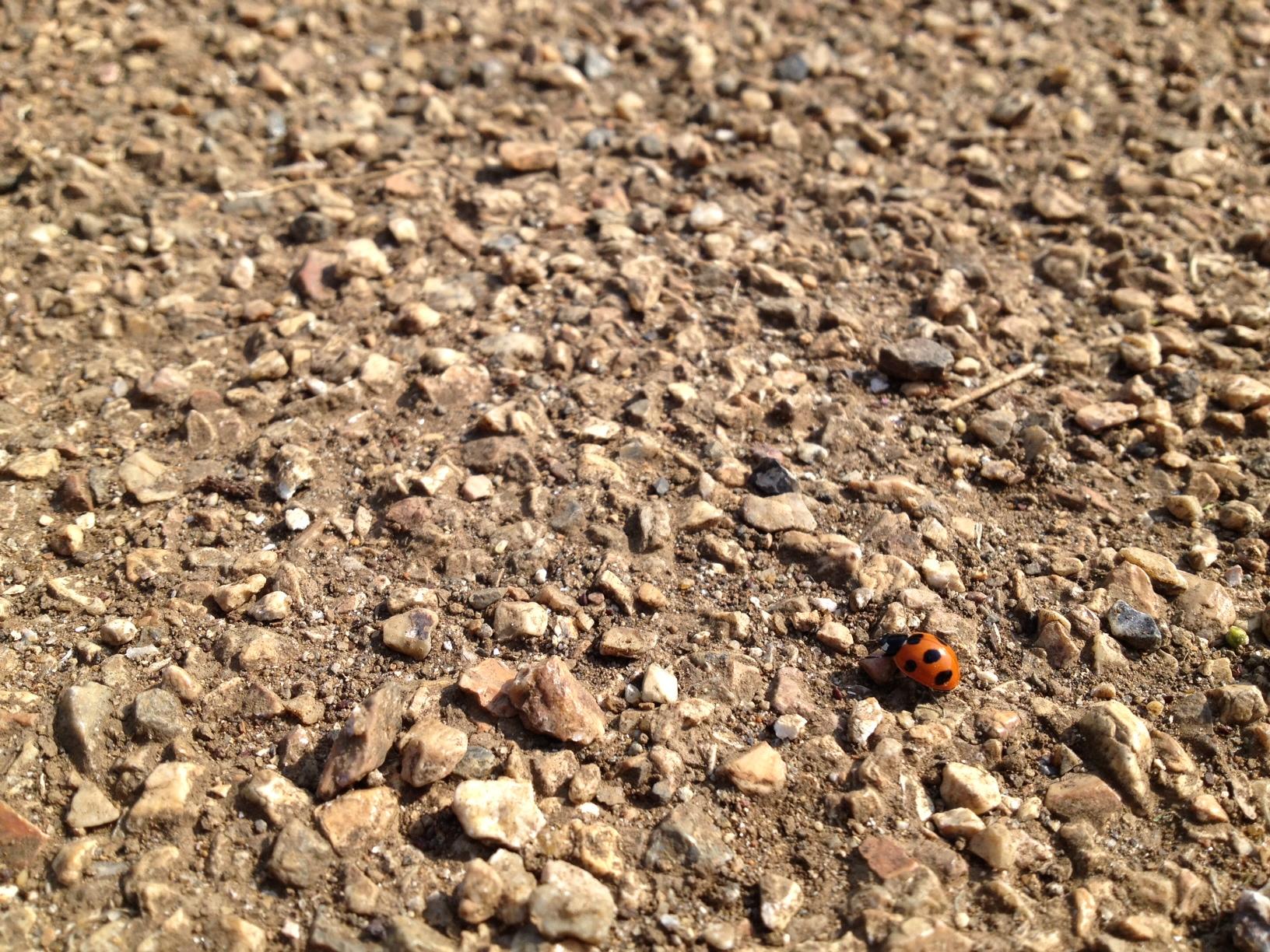 旅のてんとう虫