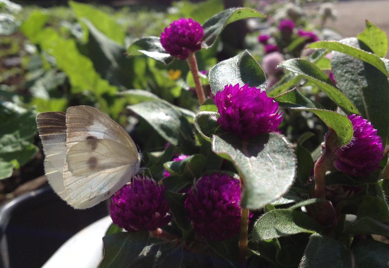 生き物(蝶とお花)