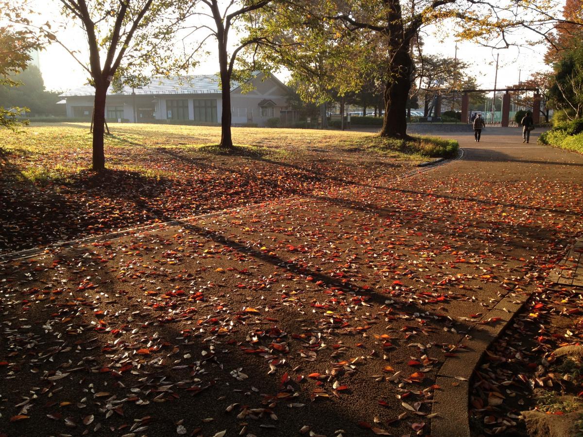 秋のかたち