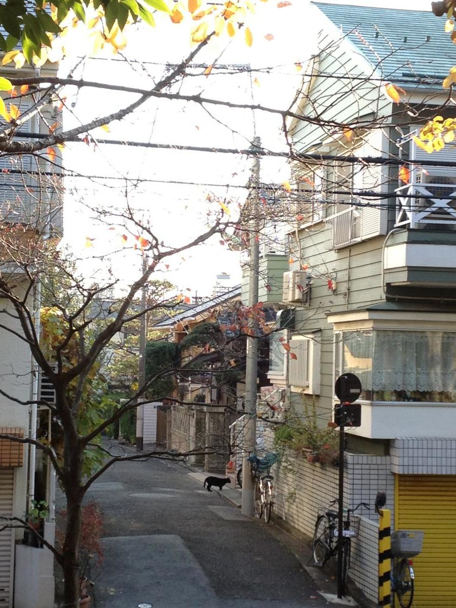12月の街と黒猫