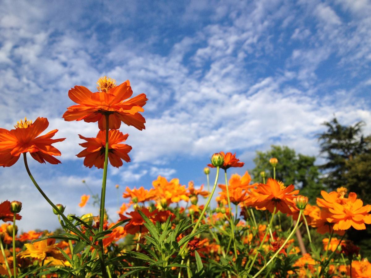 生きている感いっぱいの花